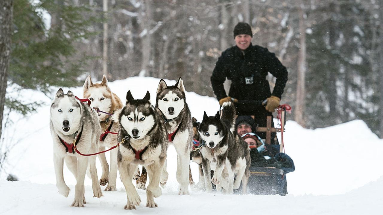 Mushing Husky | Snow Eyes Siberians | Criador Husky España